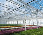 Greenhouse regulation enclosures Westland